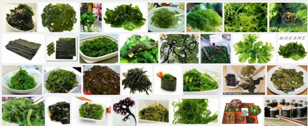 algas marinas comestibles donde comprar