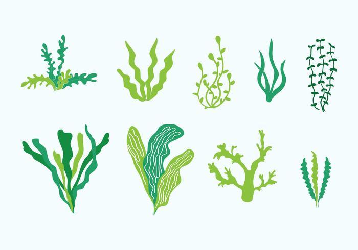 algas marinas para adelgazar