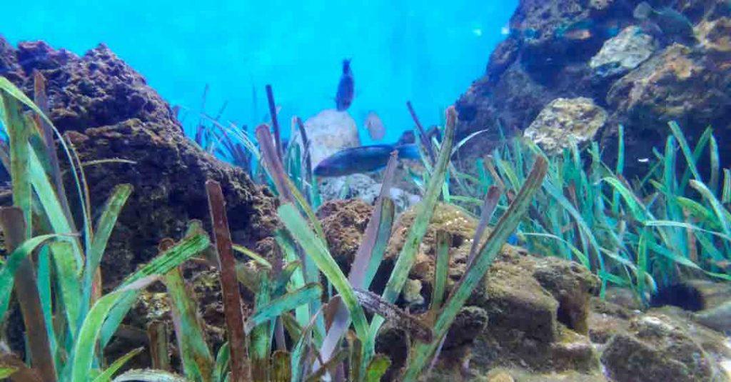 plantas y algas marinas