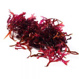 que son las algas rojas